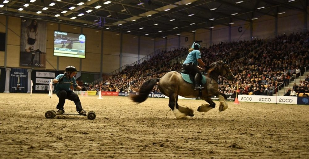 Horse Boarding - The Extreme Equestrian Sport You Need To Know About