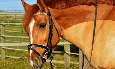 A Guide To Horse Bits Types And Styles