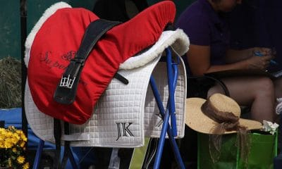 English saddles are widespread in many sports.