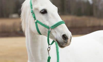A pony halter, smaller than horse halters.