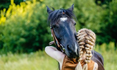 The History of Equine Therapy