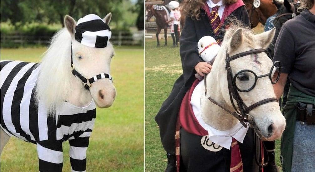 Best horse costume ideas (Halloween, Christmas and fancy dress)