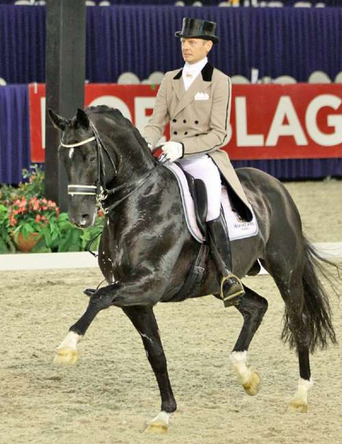 Moorland's Totilas being ridden in a dressage competition