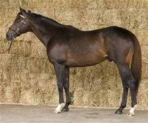 Jalil expensive horse