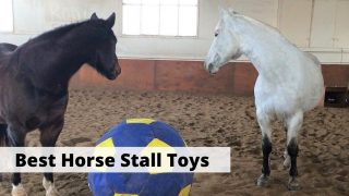 Best stall and boredom toys for horses