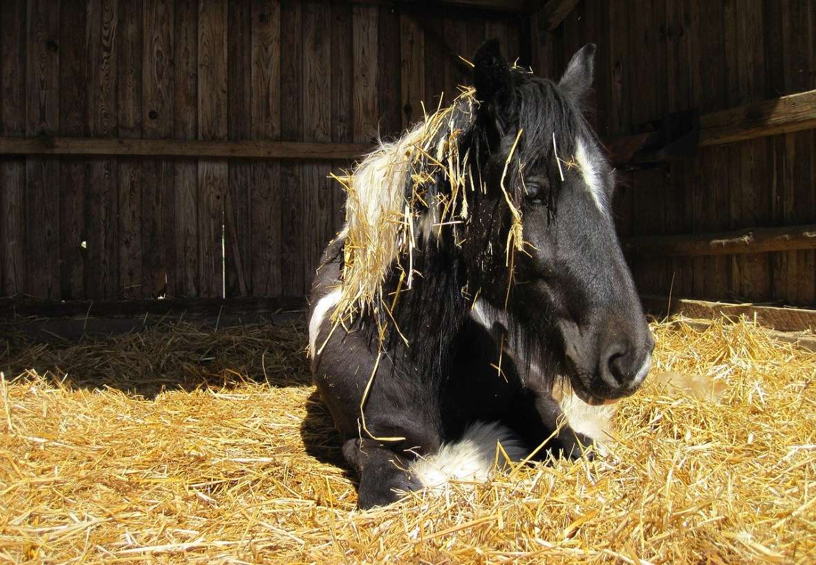 Best types of horse bedding and choosing which one is best for your horse