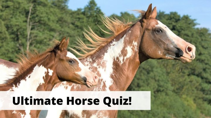 20 general knowledge horse quiz questions for equestrians