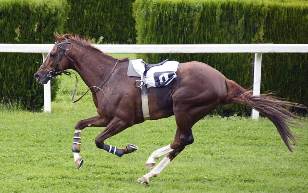 How Fast Can A Horse Run Horse Speed Facts And Videos