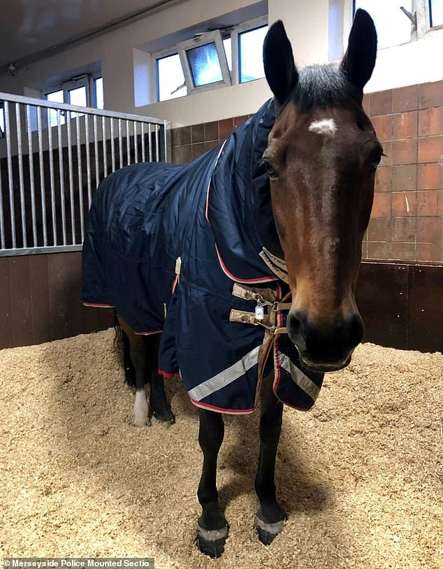 Jake the Police Horse