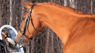How smart are horses? Horse intelligence facts, research, comparison, and studies