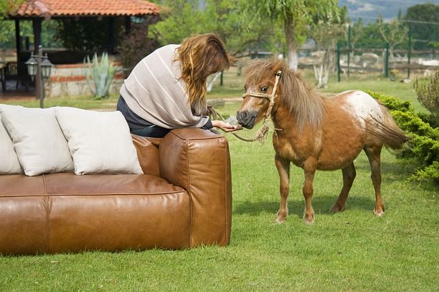 Pony being taught complex tricks by her owner