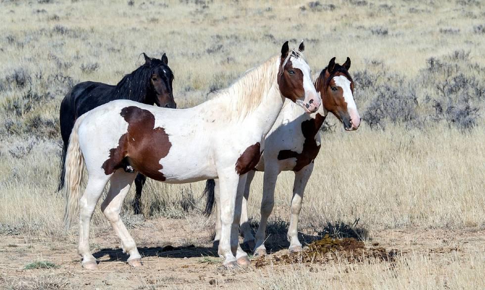 Three wild horses looking at something