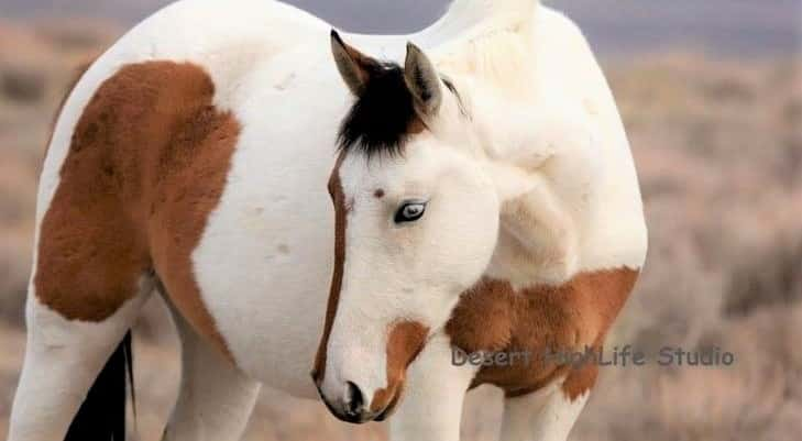 Best horse breeds for beginner riders and first time owners