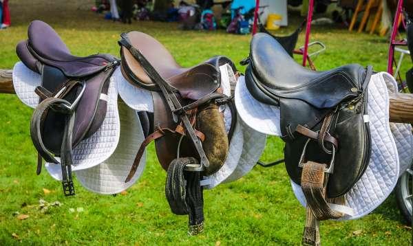 A row of three English horse saddles