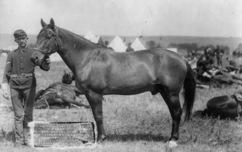 Comanche, the famous horse from the Battle of Little Bighorn