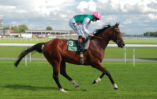 The racehorse Frankel