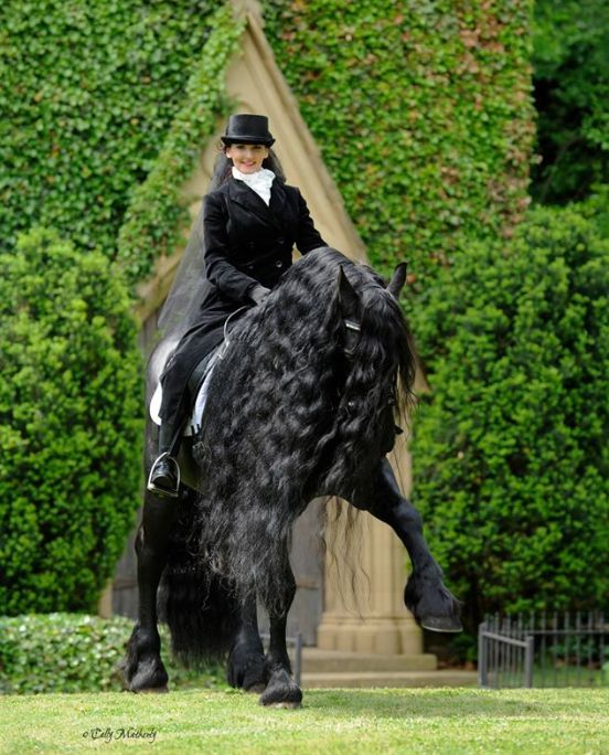 Frederick the great, the most beautiful horse ever
