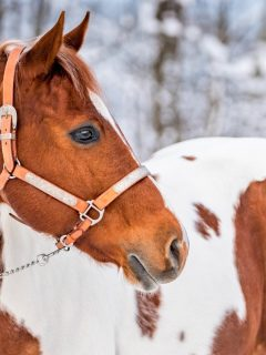 Incredible horse facts for horse lovers. Facts about breeds, equine anatomy, and more.