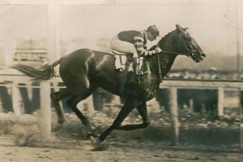 Man O'War horse