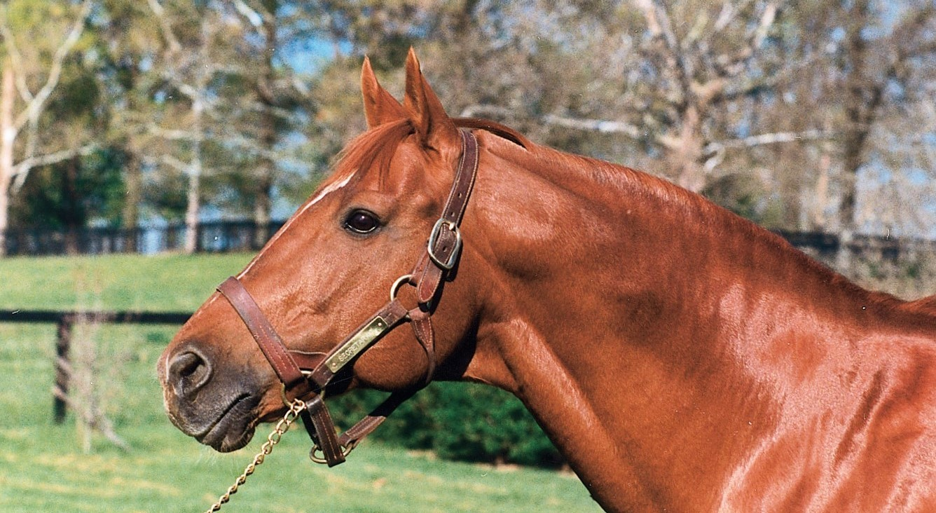 Most famous horses in history