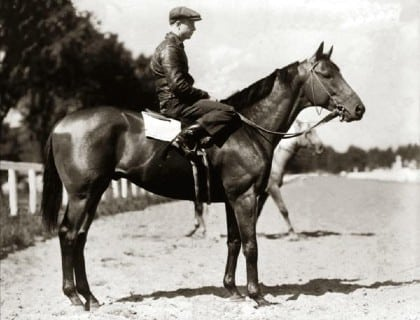 Seabiscuit, the famous racehorse