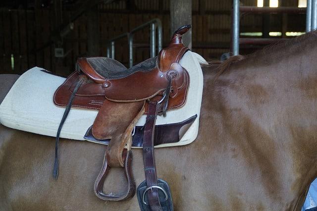 Western horseback riding saddle on a horse's back