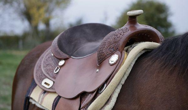 A Western saddle on a horse's back