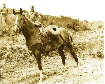 The famous war horse Sergeant Reckless