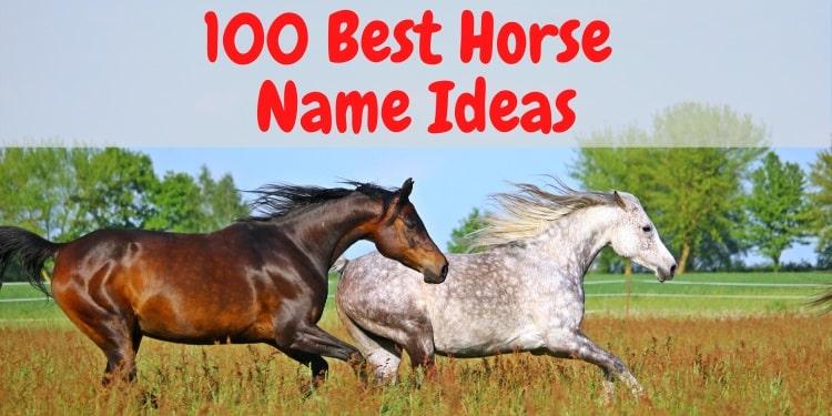 100 Best Horse Names
