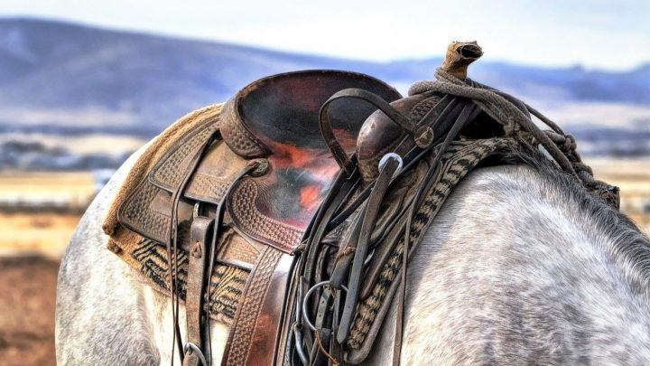 Best English and Western saddle brands for equestrians