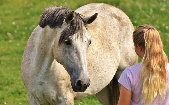 Girl and horse looking at each other