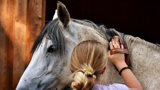 Kids horse grooming kits