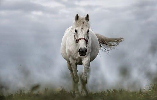 Spiritual white horse guide