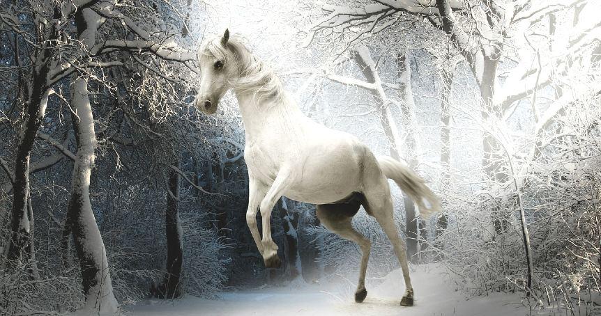 White horse in a horse dream