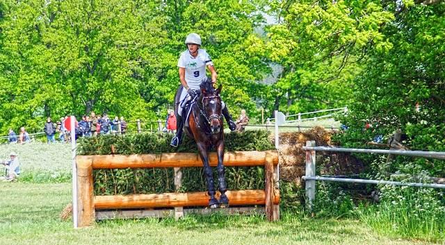 Cheval sautant une escrime lors d'un concours complet