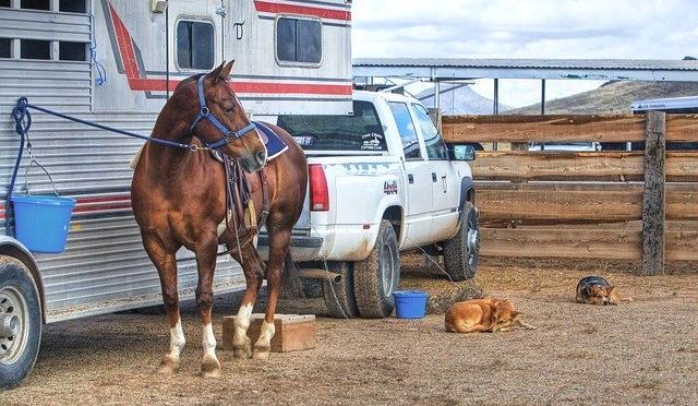 Rented horse trailer