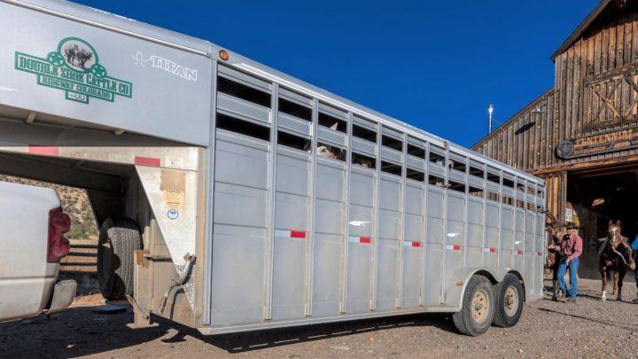 Best horse trailer brands for equestrians