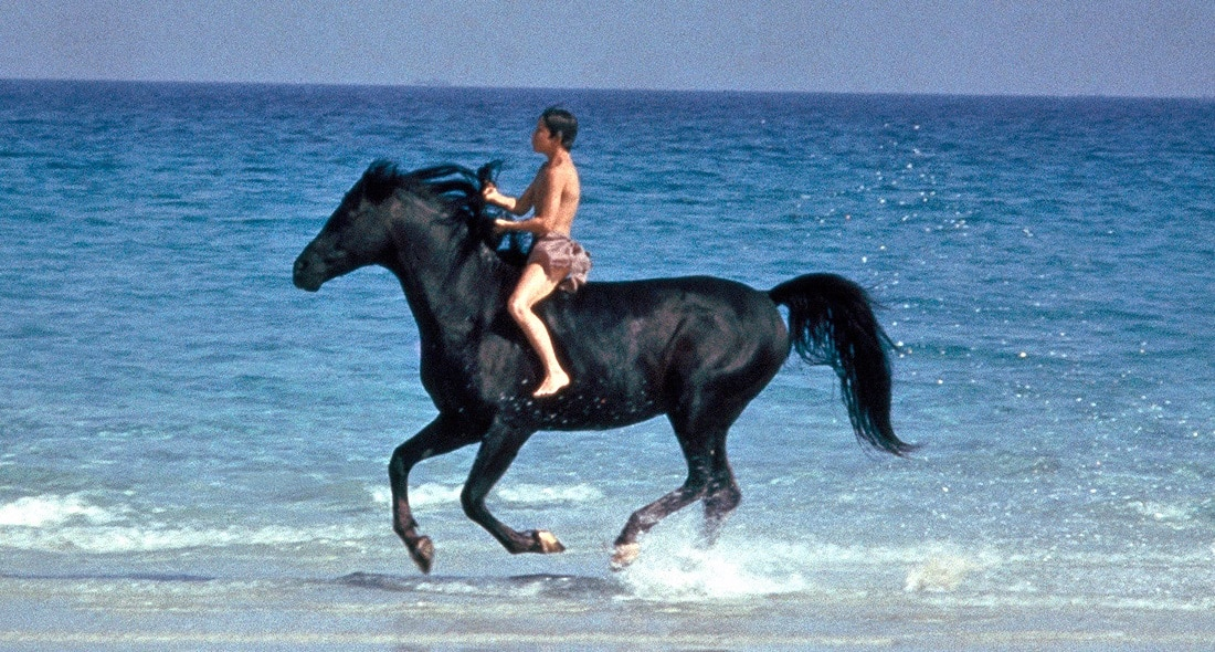 The Black Stallion movie scene