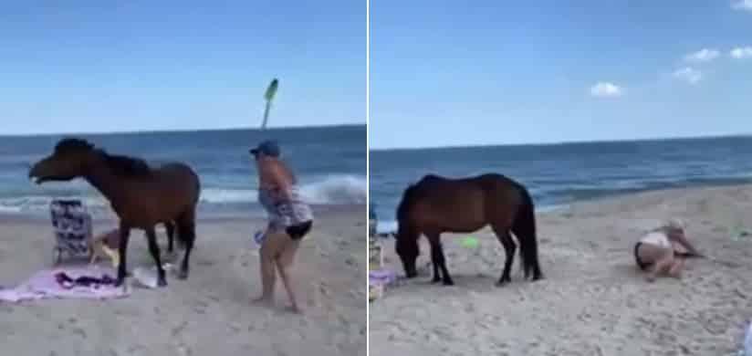 Wild pony kicks woman after she hits it with a shovel