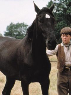 Black Beauty 1994 horse movie and boy actor