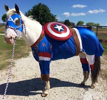 Captain America Horse Costume