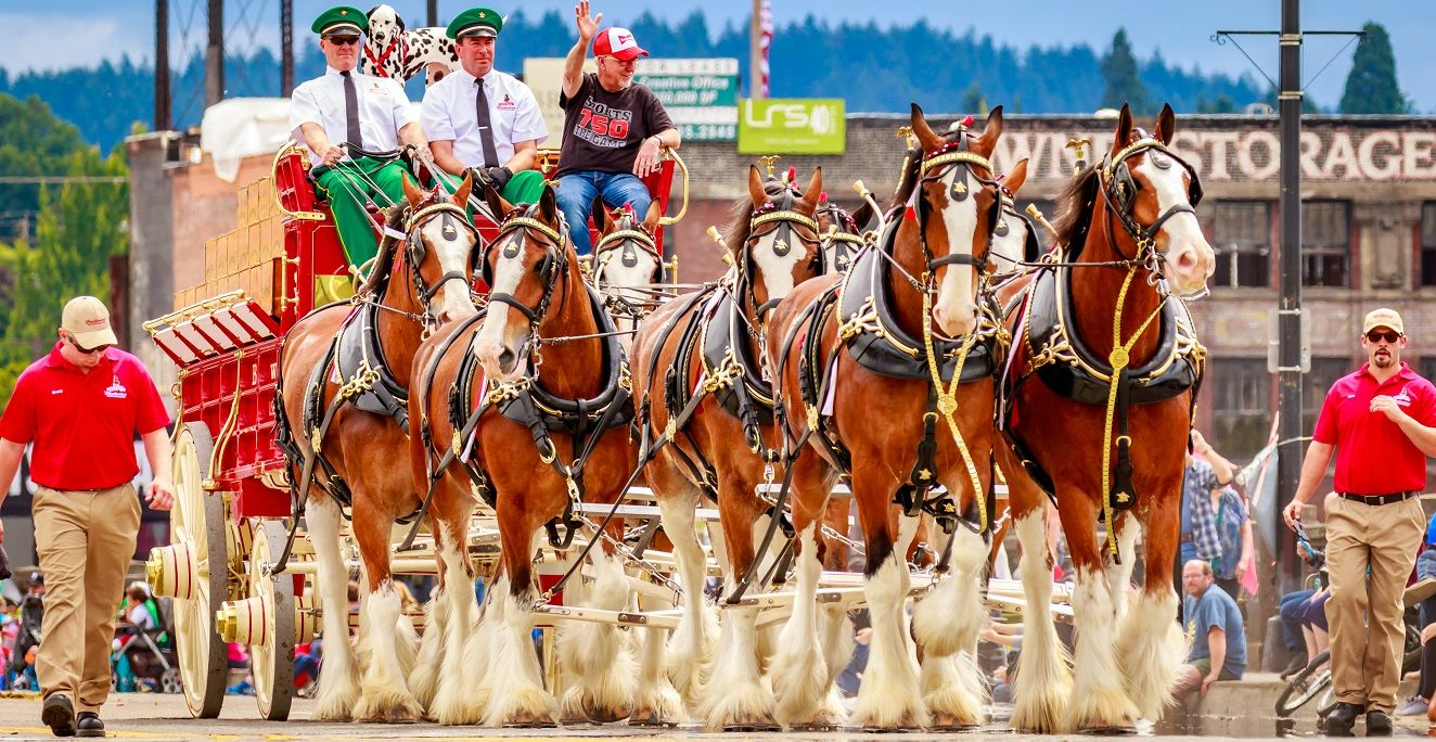 Clydesdale horse price. Horses pulling a carriage on a road