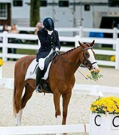 Horse eating flowers after a dressage show