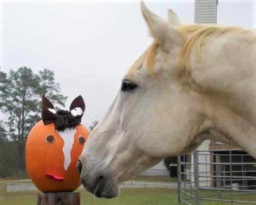 Horse looking at a pumpkin