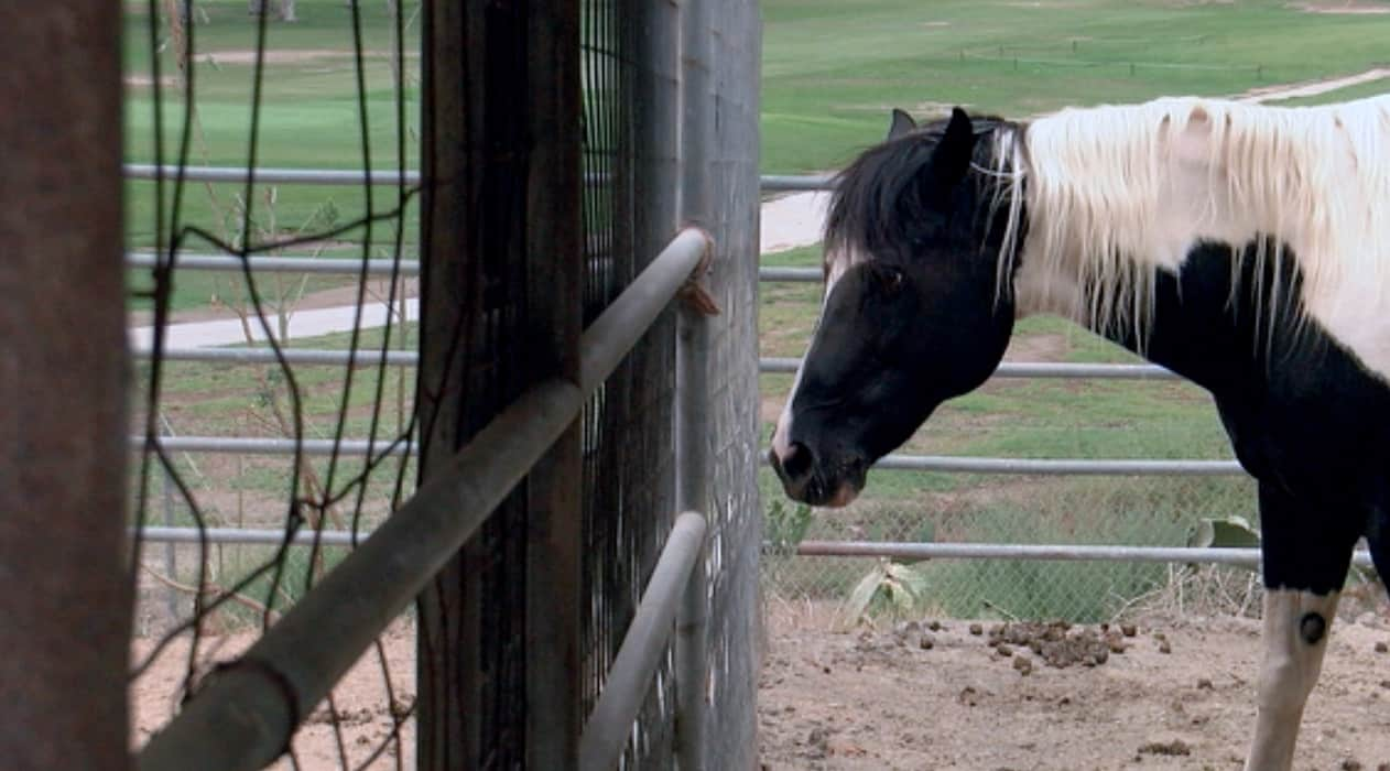 Horse ranch destroyed in fire in Valley