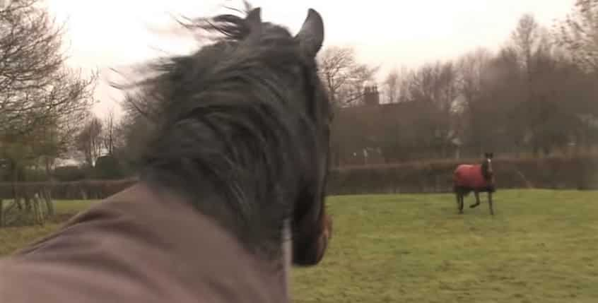 Horse reunites with old friend