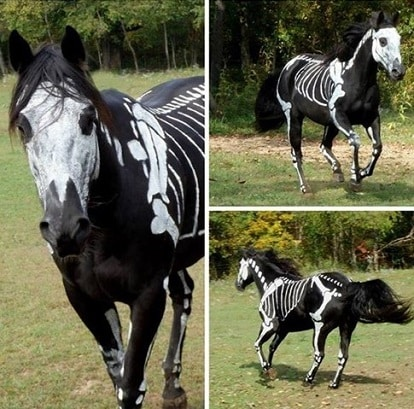Horse painted like a skeleton
