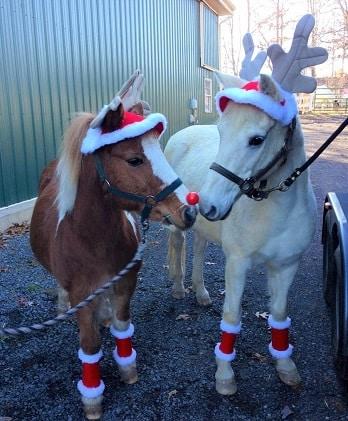 Two ponies dressed up as Reindeers