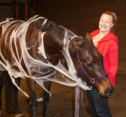 Horse with fake spider webs on it