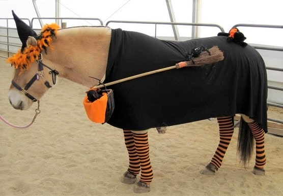 Horse dressed up as a witch